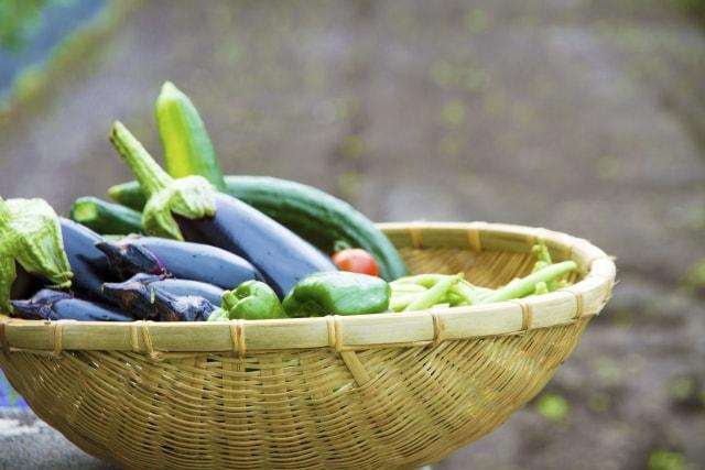 自然菜園で育てる健康野菜 ゼロから始める無農薬栽培 滋養豊かな厳選24種&12カ月野良仕事ノウハウ